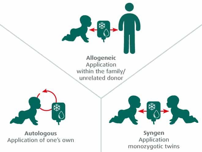 stem-cells-storing-or-donating-transplantation-autolog-allogen