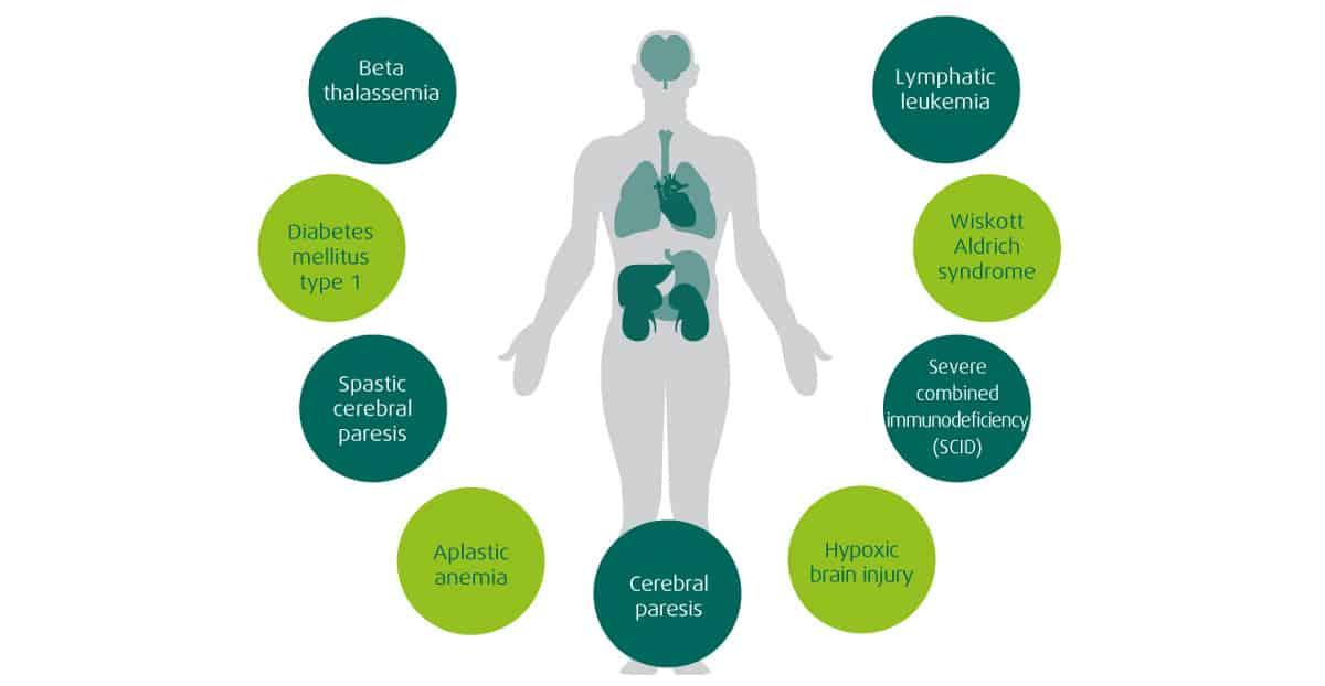 stem-cells-application-organ-tissue
